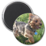 York Terrier Dog Magnet