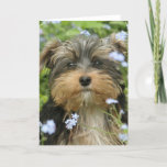 York Terrier Greeting Card