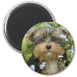 York Terrier Magnet